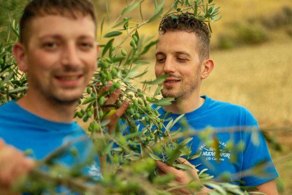 olive nostrane dalla basilicata fratelli carbone