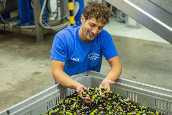 Luca e le olive selezionate